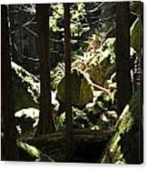 Sun On Moss Canvas Print