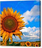 Sun On My Face Canvas Print
