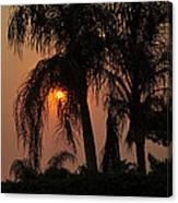 Sun Setting Behind The Queen Palm Covered In Smoke Canvas Print