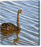 Sun Shines On Feathers Canvas Print