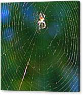 Sun Spider In Rainbow Web Canvas Print