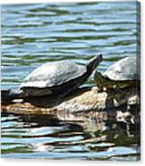 Sun Stretching Turtle And Youngster Canvas Print