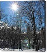 Sun Though The Trees  Canvas Print