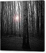 Sun Thru The Trees At Twilight Canvas Print