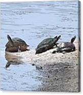 Sun Turtles Canvas Print