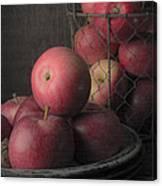 Sun Warmed Apples Still Life Canvas Print