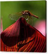 Sunbathing Dragonfly Canvas Print