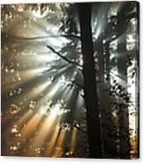 Sunbeams Through Trees Canvas Print