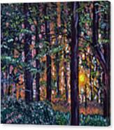 Sundown In Woods Canvas Print