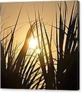 Sundown Through The Grass Canvas Print
