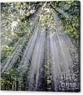 Sunfall Canvas Print