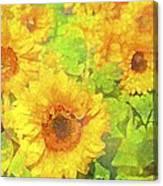Sunflower 19 Canvas Print