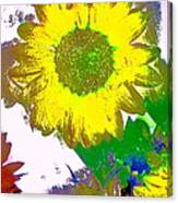 Sunflower 30 Canvas Print