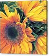 Sunflower A Canvas Print