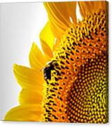 Sunflower And Bee 2 Canvas Print