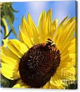 Sunflower And Bee-3879 Canvas Print