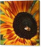Sunflower And Bee-4041 Canvas Print