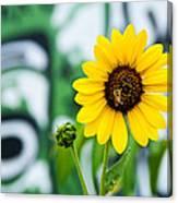 Sunflower And Graffiti  Canvas Print