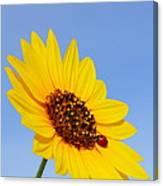 Sunflower And Ladybird Beetle 2am-110488 Canvas Print