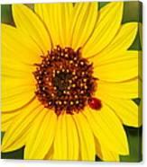 Sunflower And Ladybird Beetle 2am-110490 Canvas Print