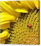 Sunflower And Ladybug Canvas Print