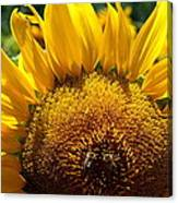 Sunflower And Two Bees Canvas Print