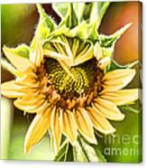 Sunflower Beauty - Painterly Canvas Print