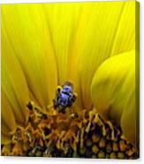 Sunflower Bee Canvas Print