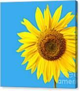 Sunflower Blue Sky Canvas Print