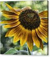 Sunflower Bokeh Canvas Print