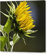 Sunflower Bright Side Canvas Print