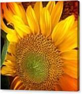Sunflower Bright Canvas Print