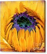 Sunflower Center Canvas Print
