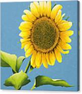 Sunflower Charm Canvas Print