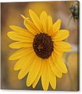 Sunflower Closeup Canvas Print
