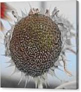 Sunflower Core Canvas Print