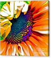 Sunflower Crazed Canvas Print