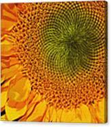 Sunflower Digital Painting Canvas Print