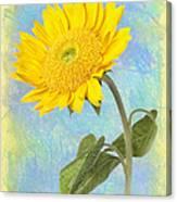 Sunflower Fantasy Canvas Print