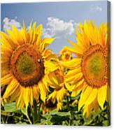 Sunflower Field And Blue Sky Canvas Print