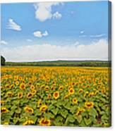 Sunflower Field New Jersey Canvas Print