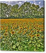Sunflower Fields Ford World Headquarters Dearborn Mi Canvas Print
