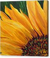 Sunflower From Summer Canvas Print