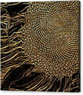 Sunflower Gold Leaf Sketch Canvas Print
