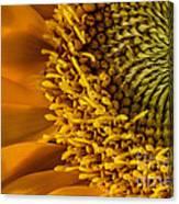Sunflower Grace Canvas Print