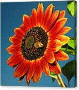 Sunflower Honey Bee Canvas Print
