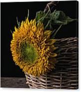 Sunflower In A Basket Canvas Print