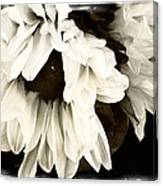 Sunflower In Black And White 1 Canvas Print