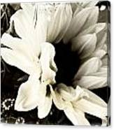 Sunflower In Black And White 3 Canvas Print