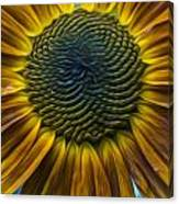 Sunflower In Rain Canvas Print